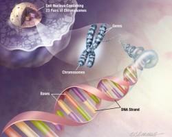 الهندسة الوراثية ونقل المورثات