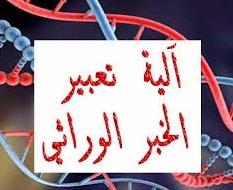 درس الخبر الوراثي - مفهومه، طبيعته و آلية تعبيره